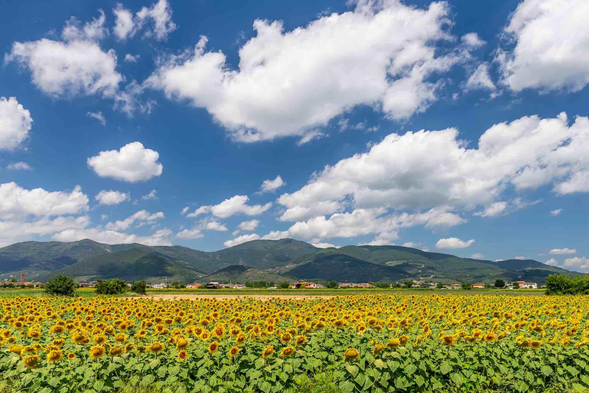 Il Monte Serra si trova in Toscana in provincia di Pisa