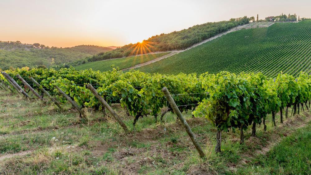 Vigne nel Chianti Classico al tramonto