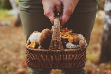 Mani tengono un cestino carico di funghi raccolti in Toscana