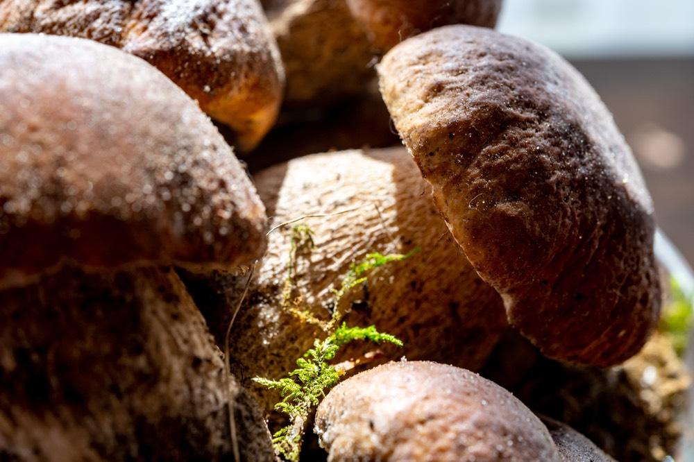 I porcini sono una varietà comune di funghi in Toscana