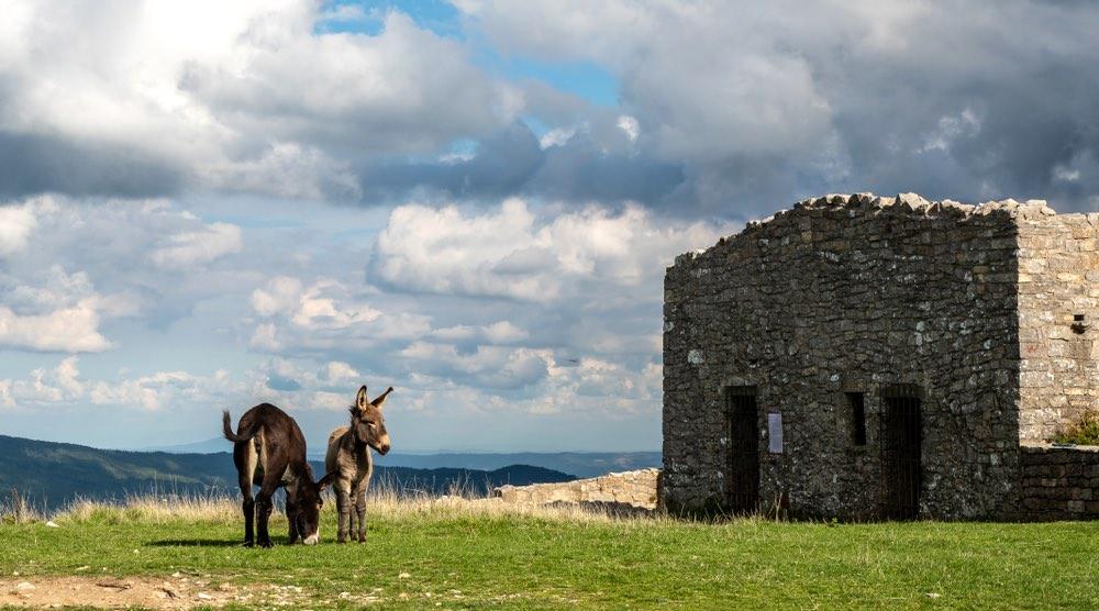 Due asini vicino alla Torre giurisdavidica sul Monte Labbro