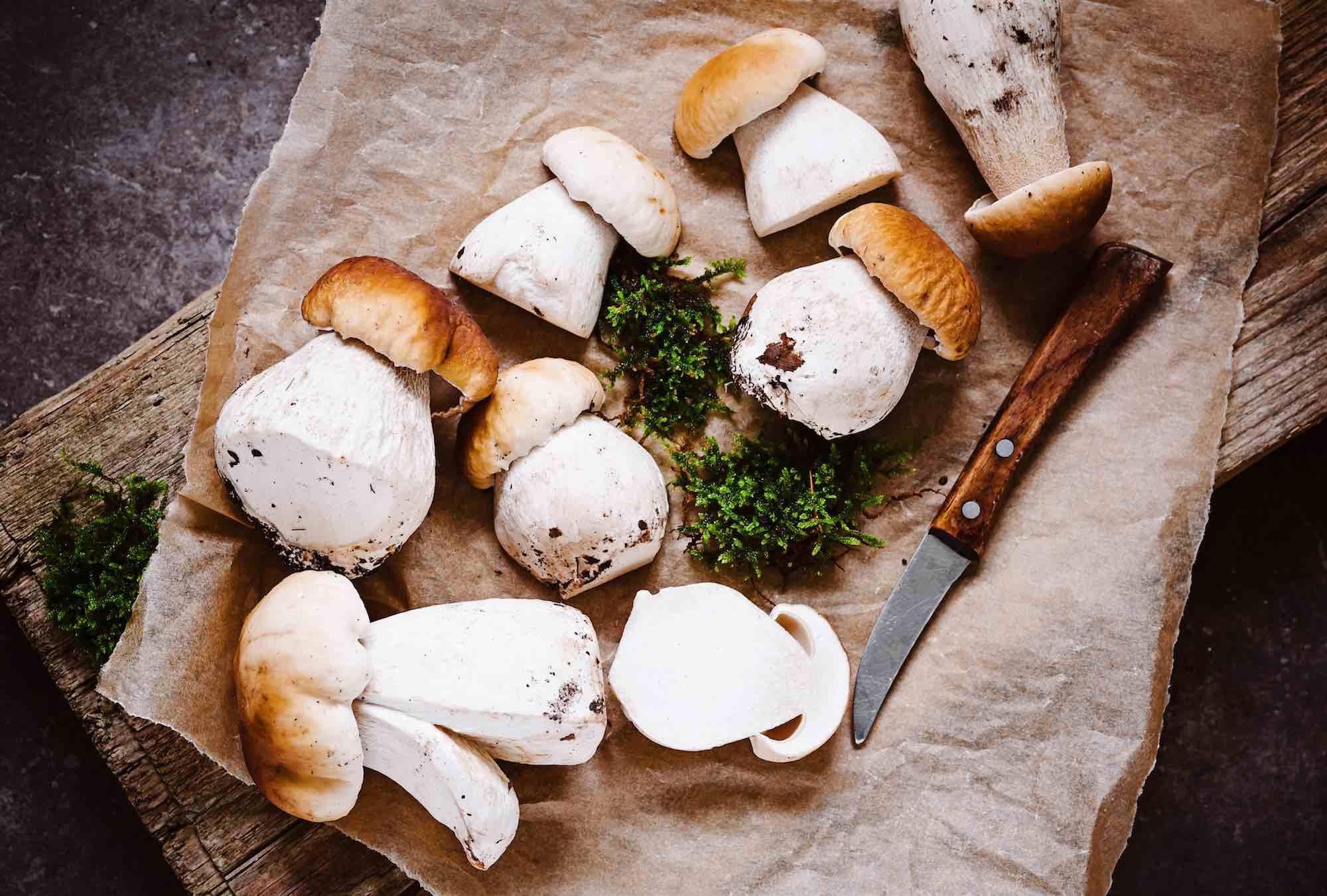 Funghi porcini su vassoio con coltello: la preparazione per ricette toscane coni i funghi