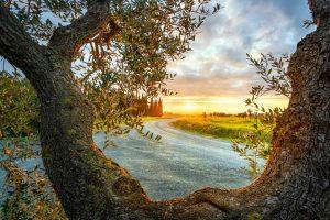 Strada tra vigne e olivi in Toscana al tramonto