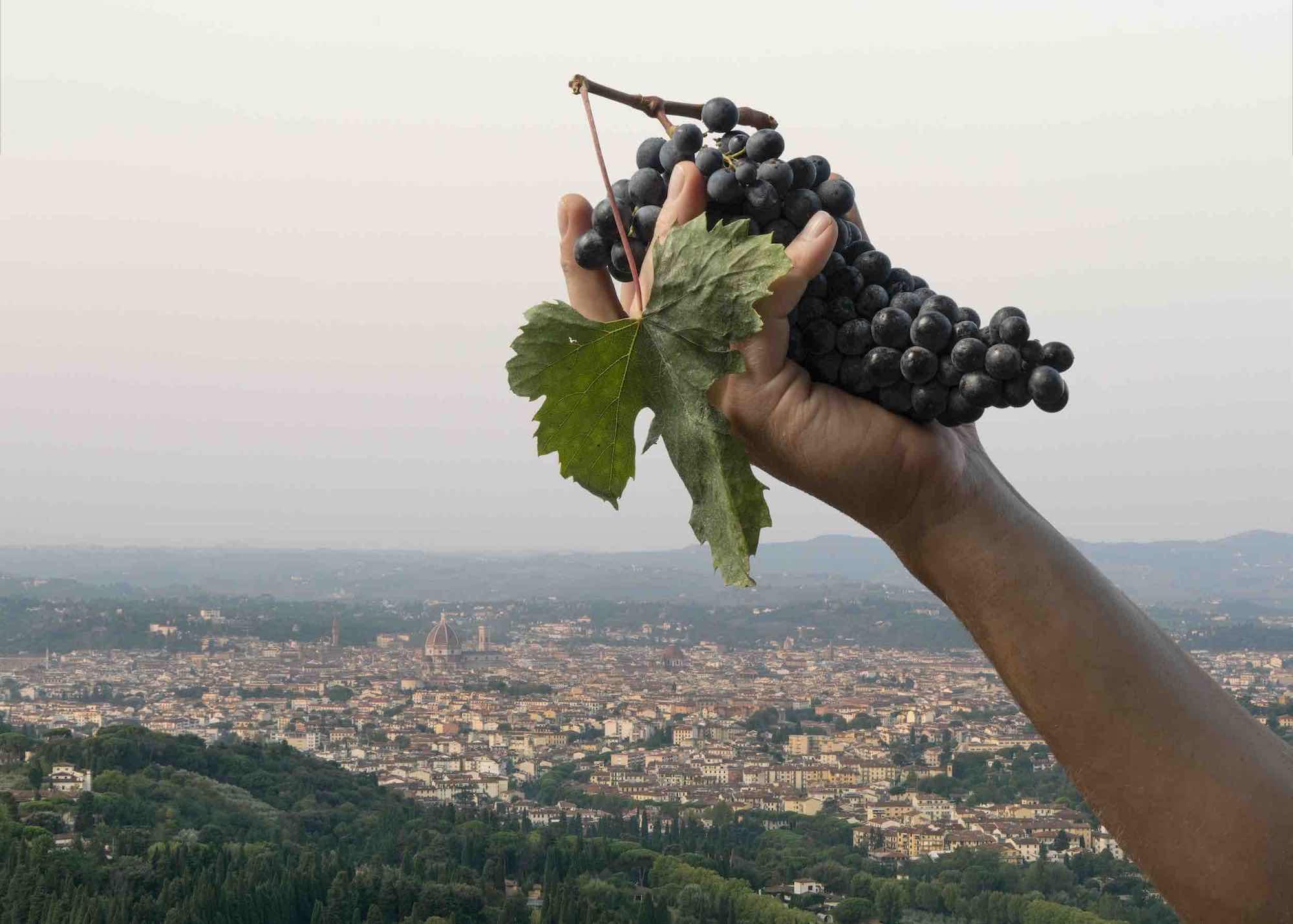 Un grappolo d'uva con foglia davanti al panorama su Firenze