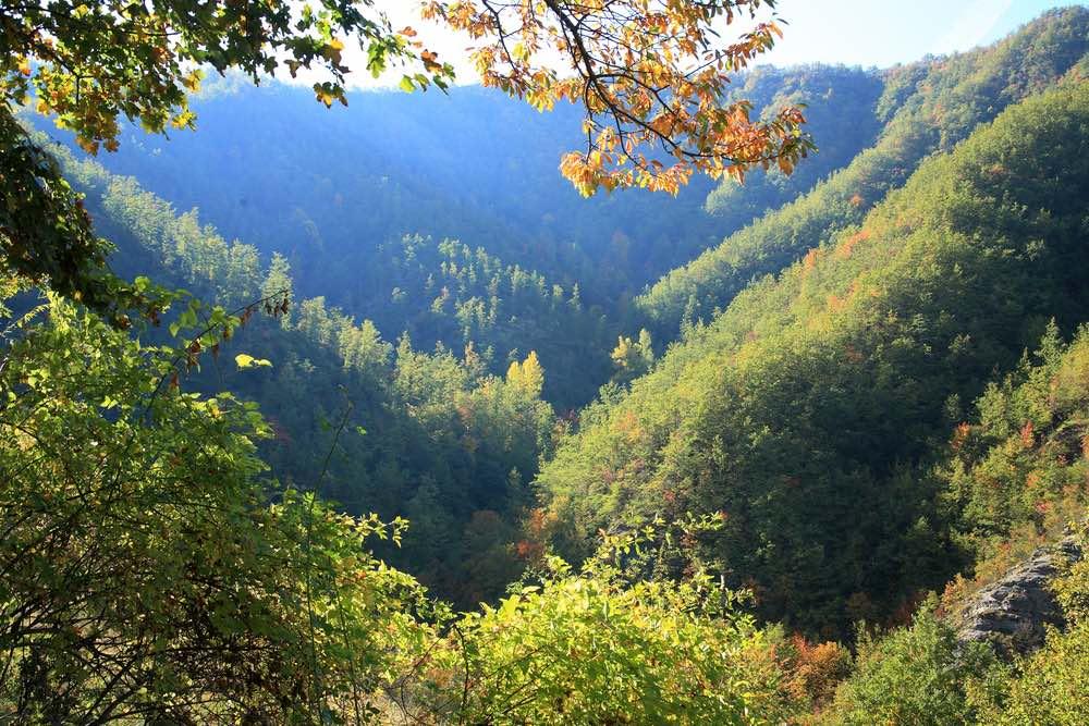 Fitto bosco di alta quota in Casentino