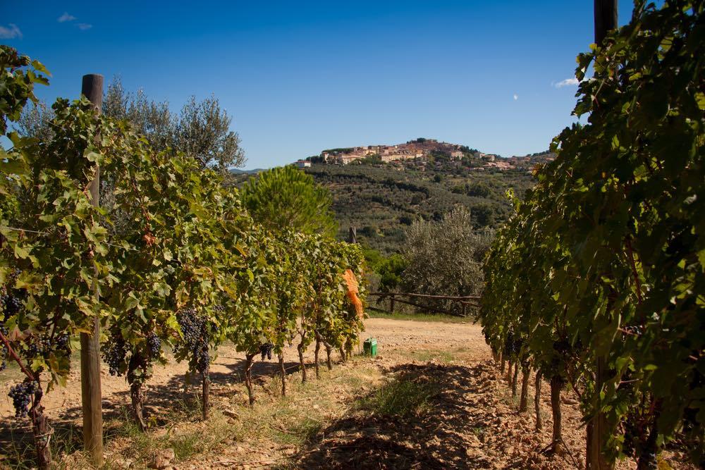 Il borgo di Castagneto Carducci visto dalle vigne sottostanti