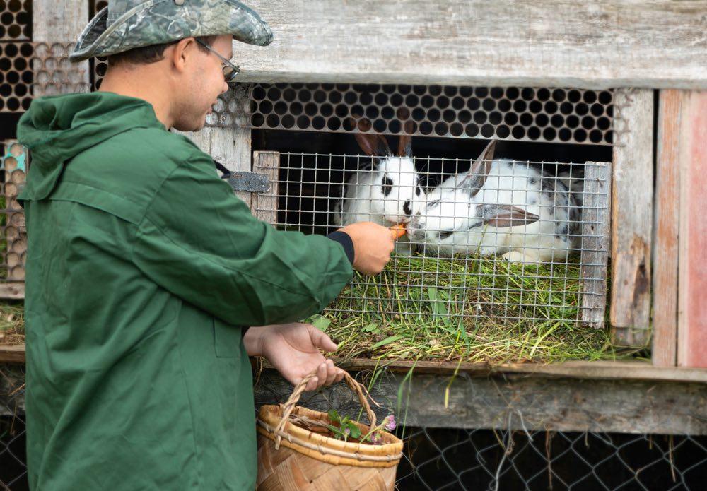 Ragazzo dà da mangiare ai conigli in una fattoria