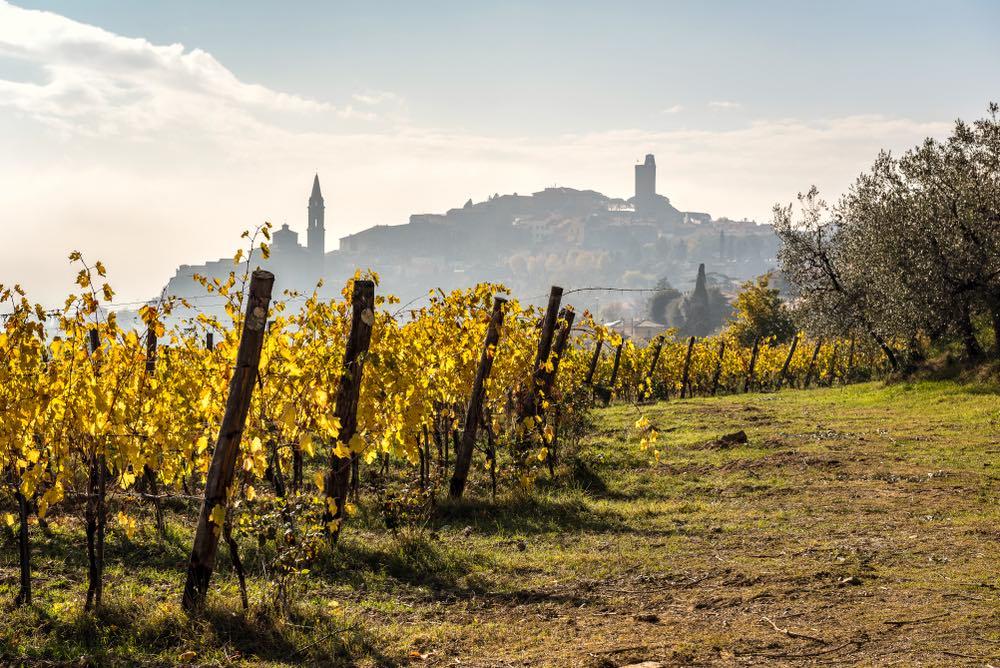 Vista del borgo toscano di Castiglion Fiorentino da un campo di viti in autunno