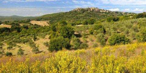 Il verde territorio di Civitella Paganico a cavallo tra Maremma Grossetana e Colli Senesi