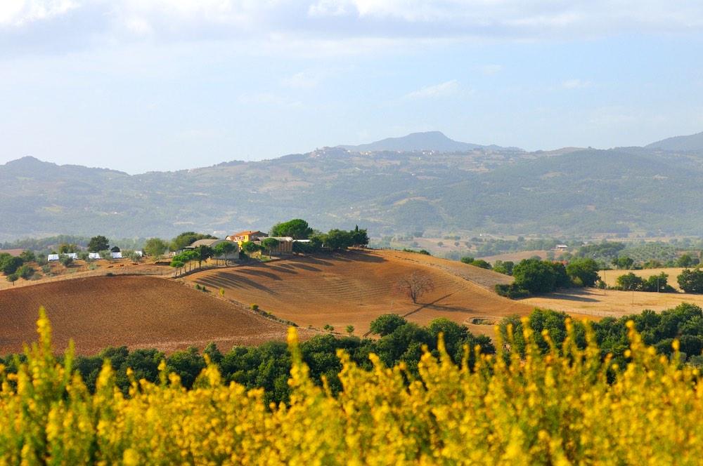 Territorio collinare di Civitella Paganico in Maremma con ginestra fiorita
