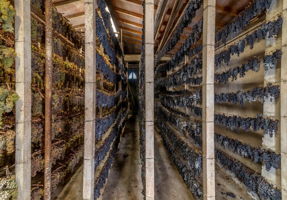 Uve ad appassire in piccionaia per la produzione di Vin Santo in Toscana