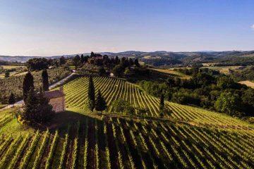 Vista sui vigneti di San Giorgio a Lapi, azienda vitivinicola a soli 6 km da Siena