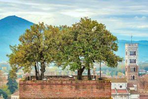Gli alberi sulla cima della Torre Guinigi di Lucca