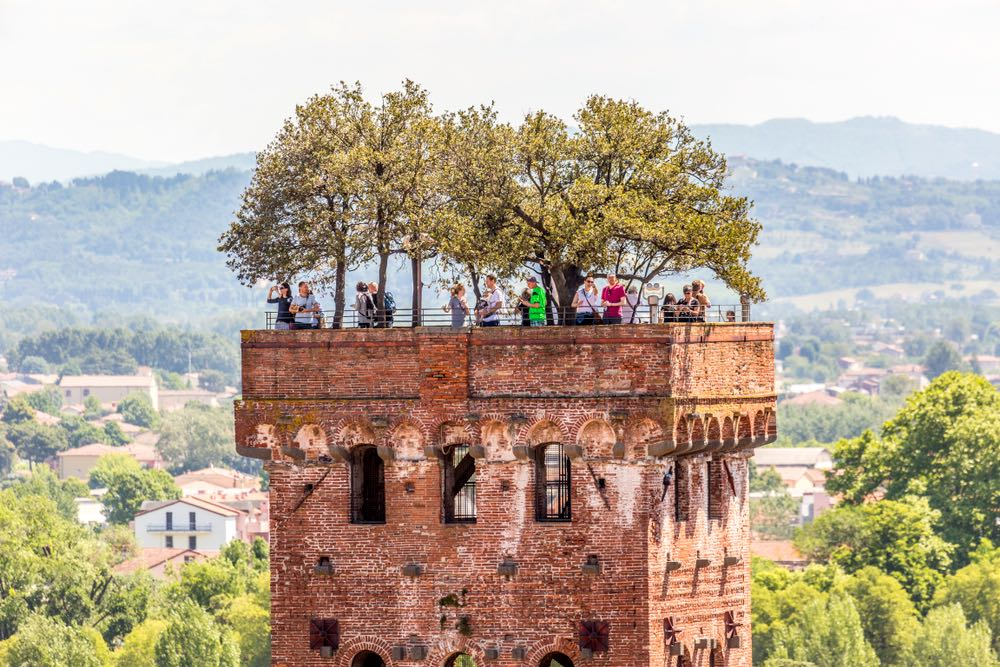 Persone sulla cima della Torre Guinigi, la torre con gli alberi di Lucca