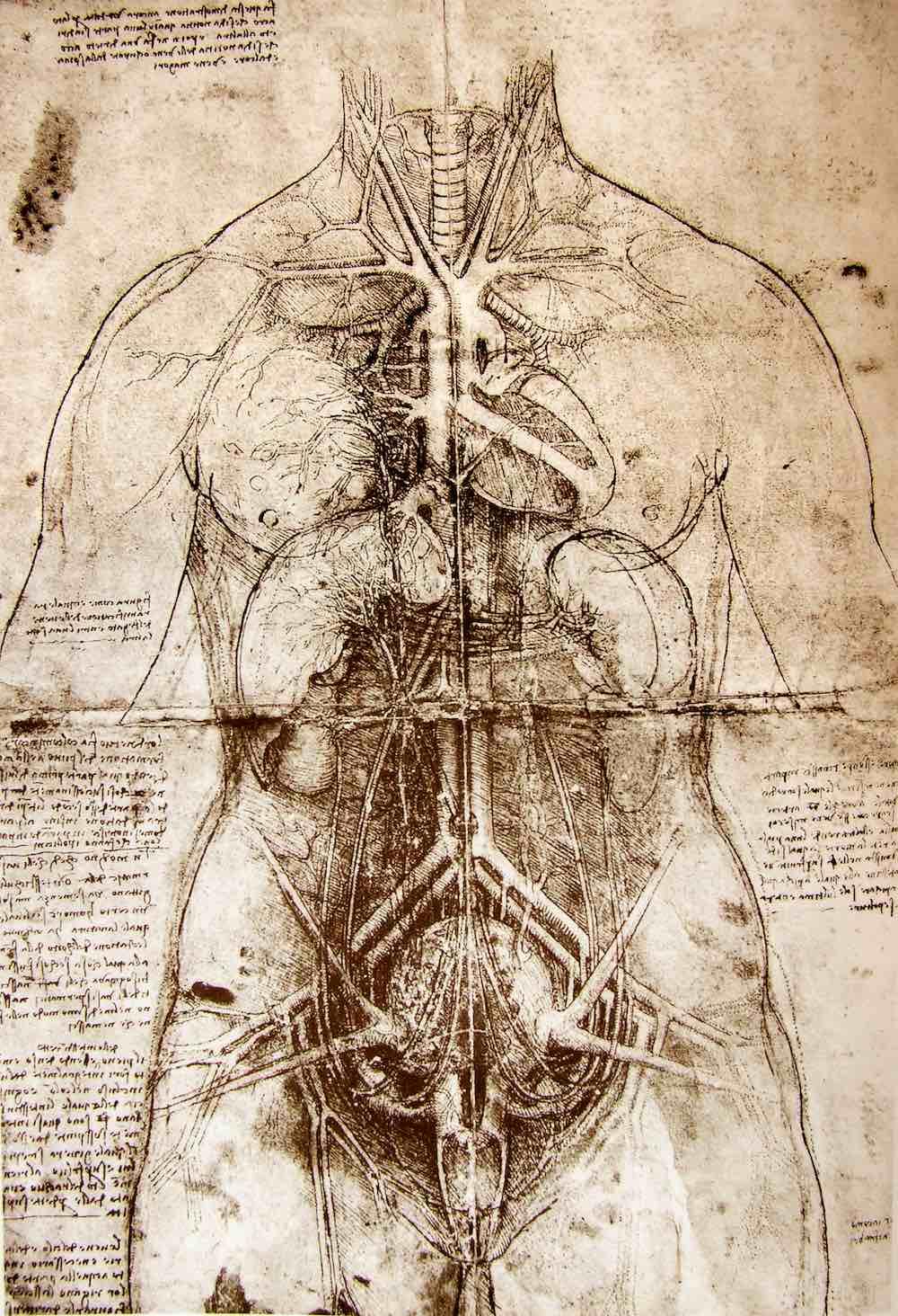 Uomo Vitruviano: studi di Leonardo da Vinci del 1492 sul corpo umano
