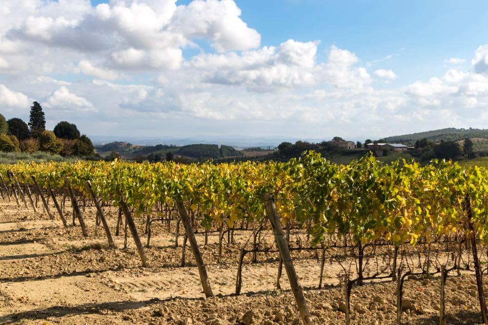 Vigne in autunno nel territorio di Monteroni d'Arbia in provincia di Siena