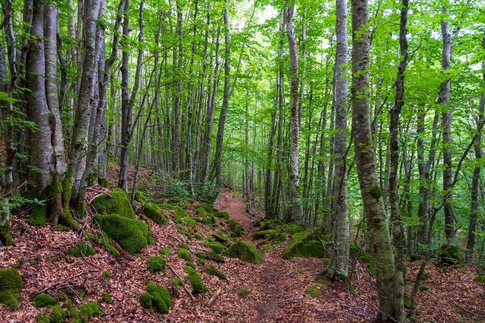 Sentiero nel bosco ricoperto di foglie nel Parco dell'Orecchiella in Garfagnana