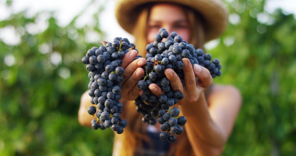 Ragazza tiene in mano grappoli d'uva