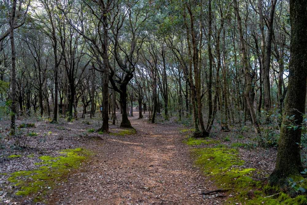 Bosco di Rimigliano, parco costiero della Toscana a San Vincenzo