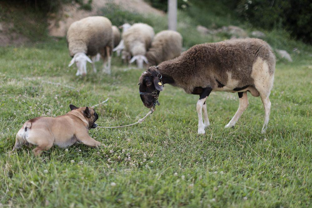Animali nell'azienda agricola Tenuta La Scure