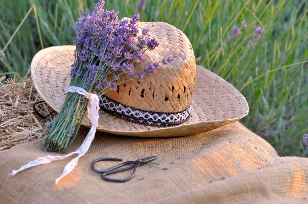 Cappello di paglia e mazzetto di lavanda presso l'Azienda Agricola I Coccoli in Toscana