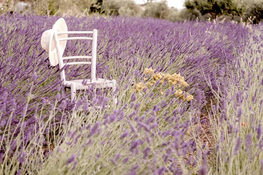 Sedia di legno con cappello in un campo di lavanda in Toscana presso l'azienda I Coccoli