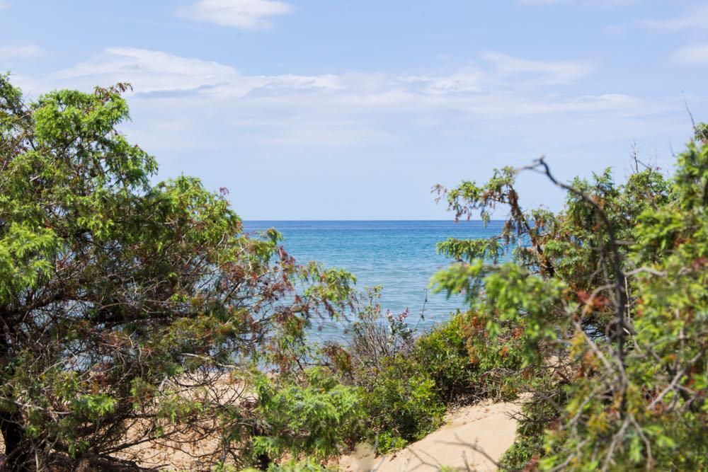 Macchia mediterranea e spiaggia del Parco di Rimigliano
