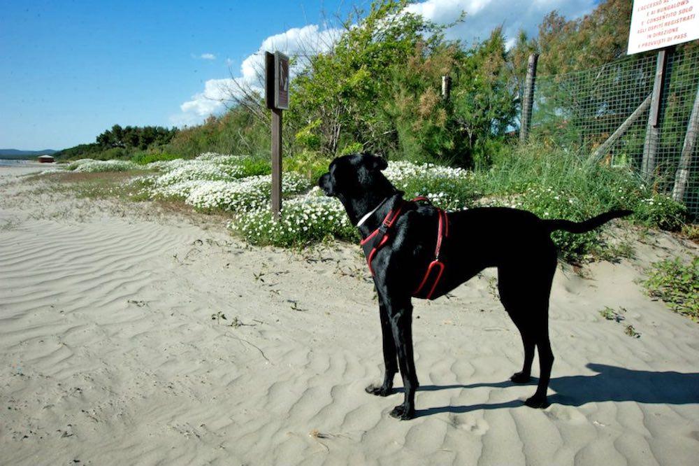 Cane sulla spiaggia di Baia dei Gabbiani in Toscana