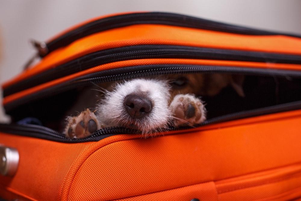 Cane in valigia arancione