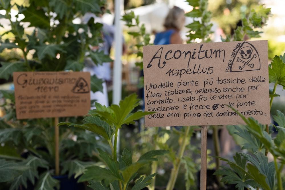 Stand di Herbarium di Annalisa Ciani a EvergreenForte 2021